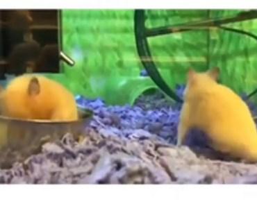 Poor hamster - funny - poor hamster funny