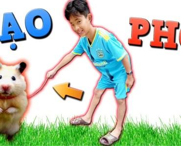 Tony | Dắt Chuột Gấu Đi Dạo Công Viên Cua Gái - Hamster In Park - tony dat chuot gau di dao cong vien cua gai hamster in park