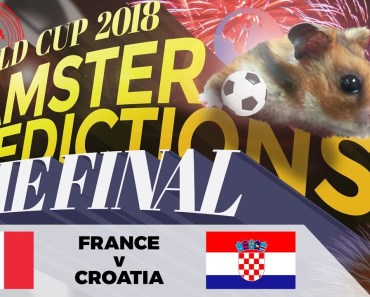 World Cup 2018 Finals Hamster 'Predictions': France v Croatia - world cup 2018 finals hamster predictions france v croatia