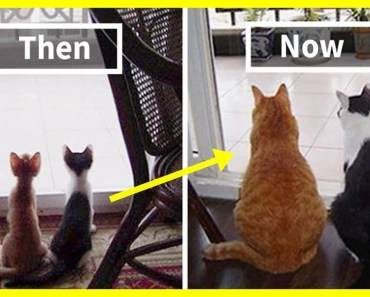 10+ Before & After Pics Of Animals Growing Up Together - 10 before after pics of animals growing up together