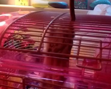 Funny hamster - 1533466091 funny hamster
