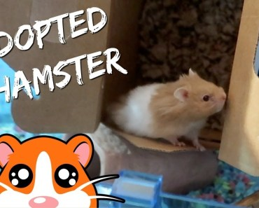 ADOPTING A SPECIAL NEEDS HAMSTER FROM PETSMART - adopting a special needs hamster from petsmart
