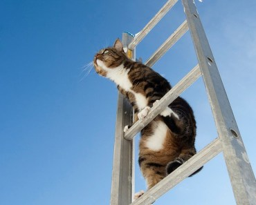 Funny Cats Climbing - And Sometimes Failing! - funny cats climbing and sometimes failing
