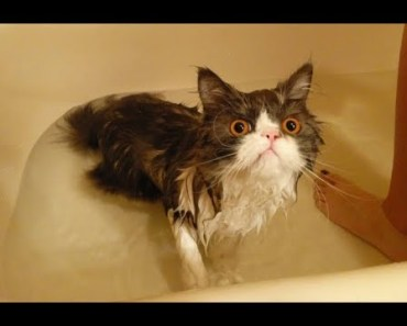 Funny Cats in Water Compilation | Cute and Funny Cats Videos Ever - funny cats in water compilation cute and funny cats videos ever