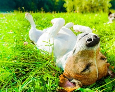 Funny Dogs Sunbathing - Hold Your Laugh If You Can! - funny dogs sunbathing hold your laugh if you can