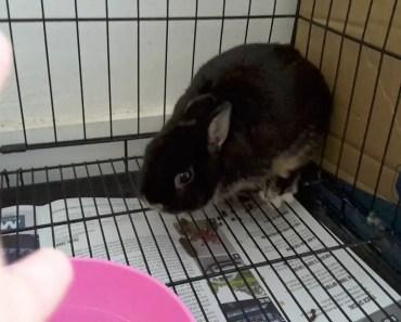 Funny hamster but rabbit - funny hamster but rabbit