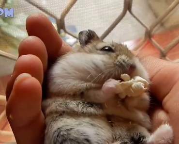 Funny Hamsters A Cute And Funniest Hamster Videos Compilation NEW HD - funny hamsters a cute and funniest hamster videos compilation new hd
