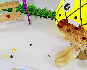 Funny Mochi Yellow Hamster plays in playground - funny mochi yellow hamster plays in playground