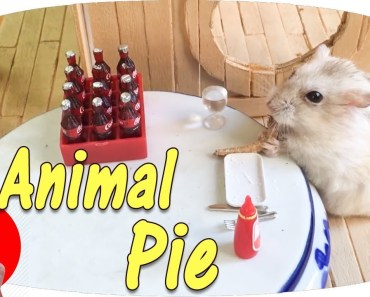 Hamster Eating Animal Pie With Coca-Cola | Hamster Kitchen And Hamster House | Love-Hamster - hamster eating animal pie with coca cola hamster kitchen and hamster house love hamster