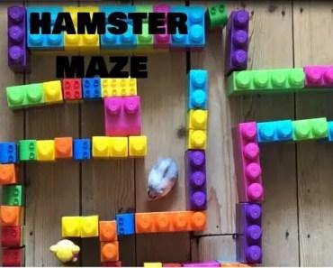HAMSTER MAZE ! USING LEGO - hamster maze using lego