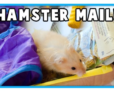 Hamster & Mouse Toys & Healthy Treats Unboxing! - hamster mouse toys healthy treats