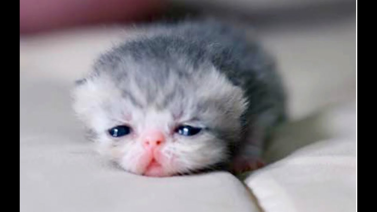 JUST WATCH These Cute Baby Animals Cute Animal Babies Videos