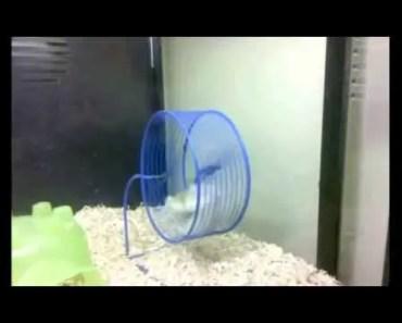 Lazy and Funny Hamster - lazy and funny hamster