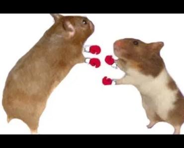 LOL Dancing hamster! *FUNNY* - lol dancing hamster funny