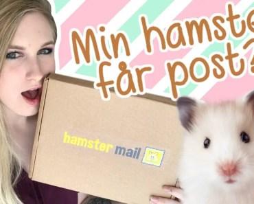 Min hamster har fået post! | HAMSTER MAIL - min hamster har faet post hamster mail
