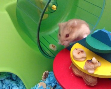 My hamster is so silly XD lol - my hamster is so silly xd lol