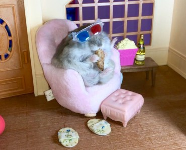 Tiny hamster watching 3D movie - Cute and funny videos of hamsters - tiny hamster watching 3d movie cute and funny videos of hamsters