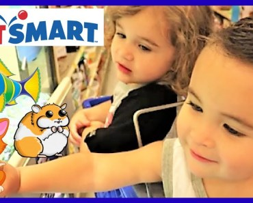 TODDLERS GOING TO PETSMART PET STORE SEEING CATS, HAMSTERS, SNAKES, AND FISH!! - toddlers going to petsmart pet store seeing cats hamsters snakes and fish