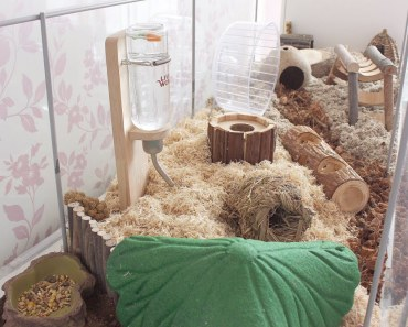 CLEANING MY HAMSTER CAGE   NATURAL THEME -