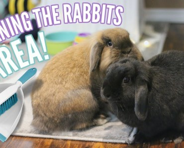 HOW I CLEAN MY RABBITS AREA -