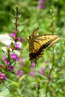 季節の花と蝶