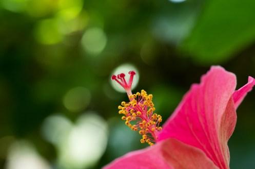 温室の花の写真