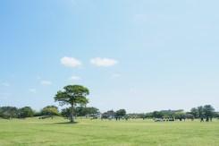 園内の風景写真