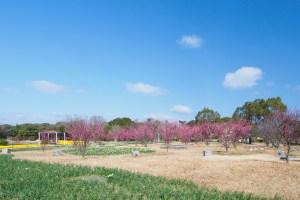 海の中道海浜公園の梅の写真