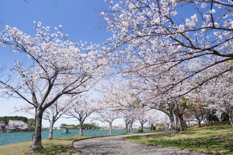 駕与丁公園の桜の写真