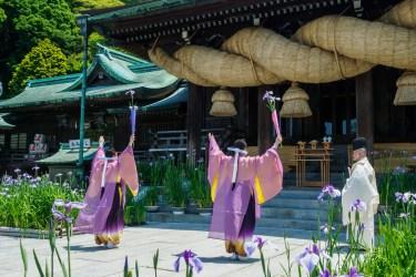 宮地嶽神社の菖蒲初刈り神事の写真