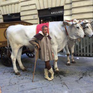 キアーナ牛