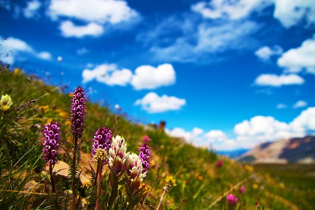 夏の花、summer-flower