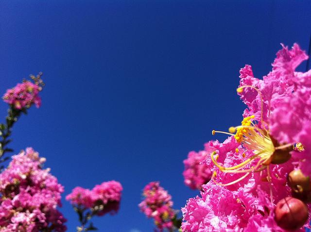 7月の花画像花言葉誕生花色 花言葉 由来