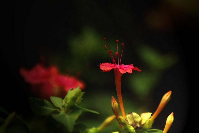 8月の花画像花言葉誕生花色 花言葉 由来