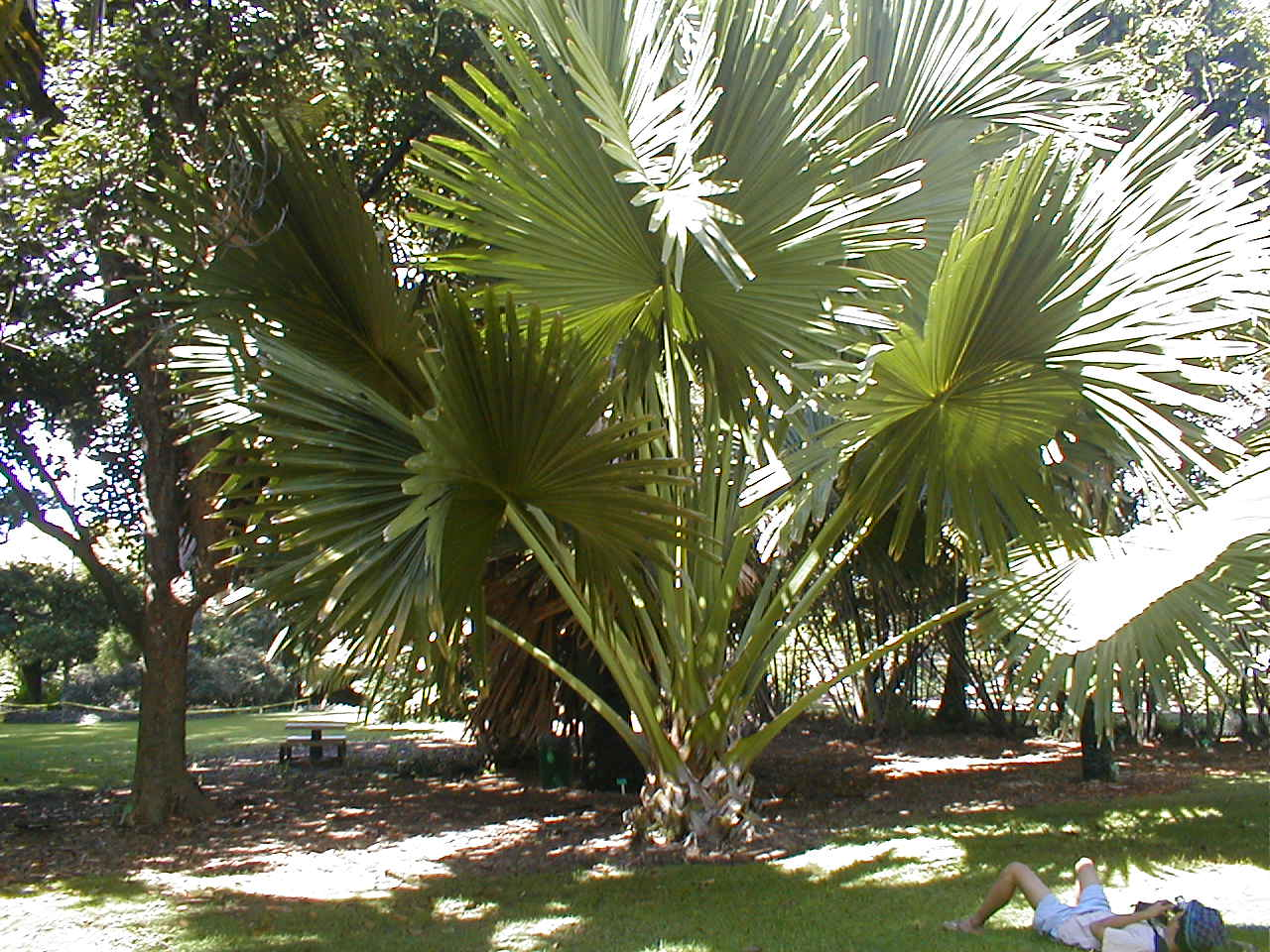 My potted palms are screaming  Pa Kanu Ola Garden of Life Essence