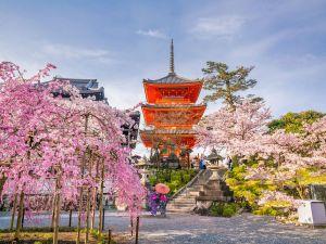 sakura-in-tokyo