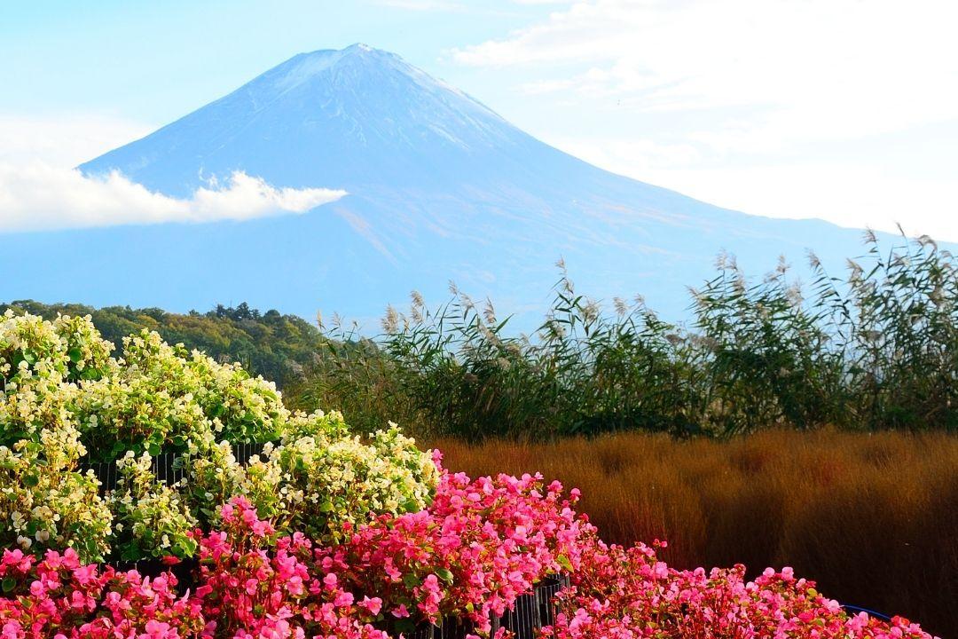 Mt Fuji 2 (Canva)