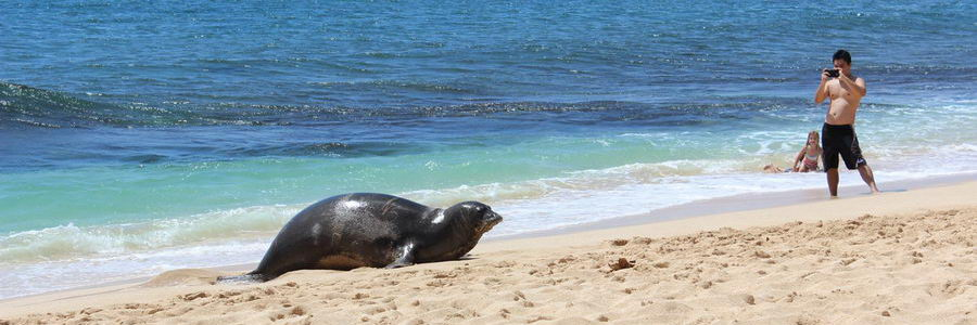 pregnant-seal