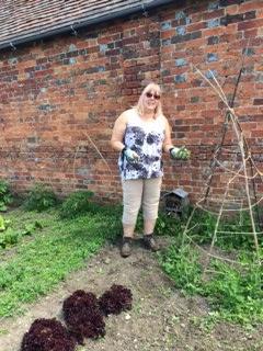Gardening, weeding the sweet peas