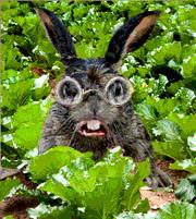 Roger-Rabbit-icon1
