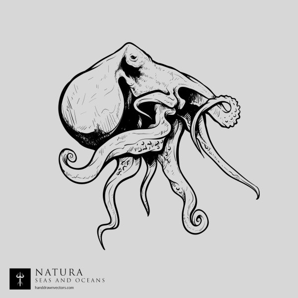 Octopus-Sea-Vector