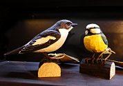 Träfåglar med lokalkännedom
