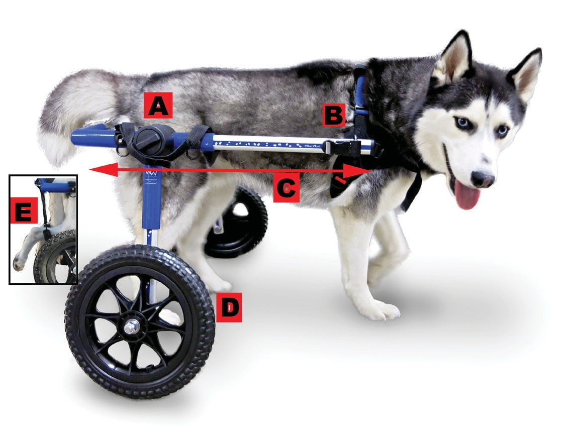 Dog Chair Walkin Wheels Dog Wheelchair Instructions And User Manual