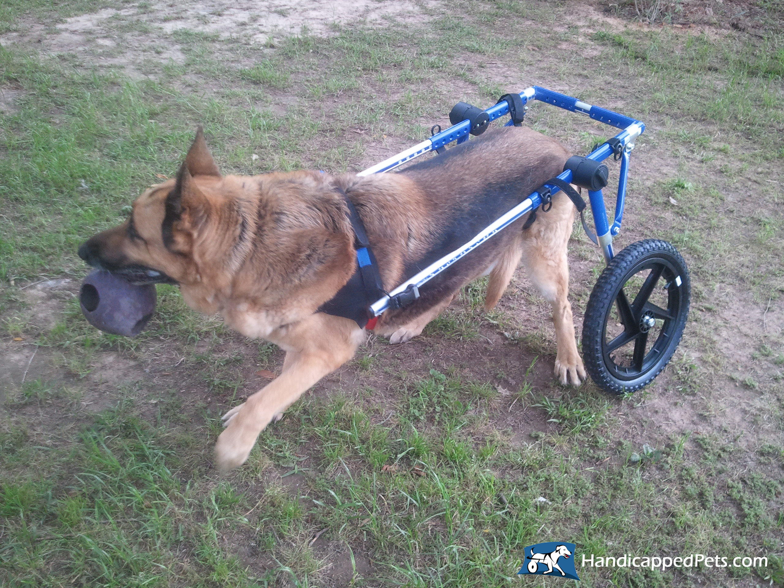 wheel chairs for dogs baby trend butterfly high chair dog wheelchair cat walkin wheels wheelchairs