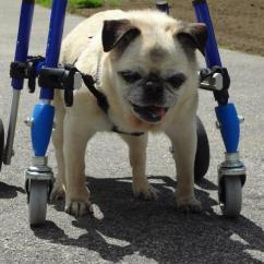 Wheelchair Dog Office Chair Armrest Accessories Walkin Wheels Mini Wheelchairs Carts