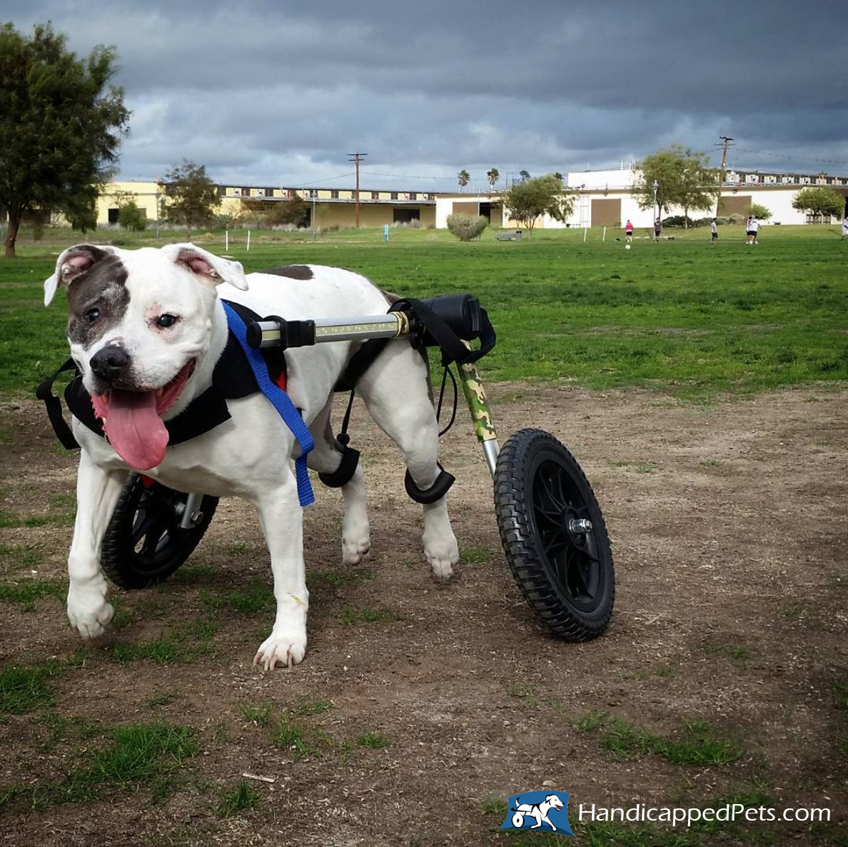 wheel chairs for dogs mid century modern wire chair dog wheelchair walkin 39 wheels wheelchairs carts