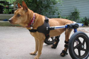 wheelchair dog gaming chair for pc cat walkin wheels wheelchairs