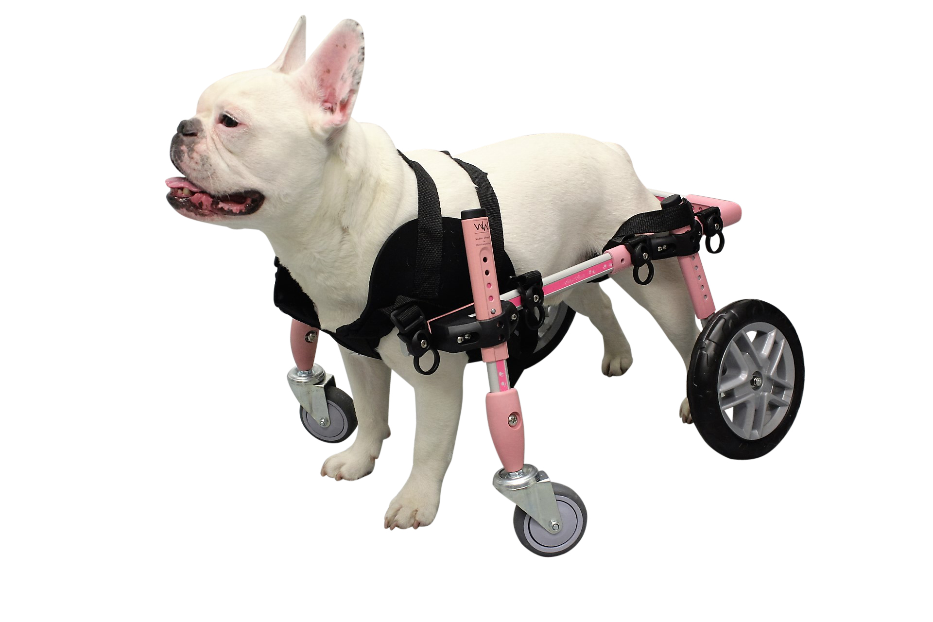 wheelchair harness chair covers at spotlight dog wheelchairs carts