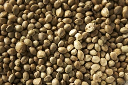 hemp seed nepal wholesale