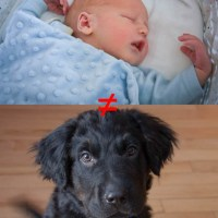 How Dogs and Babies are (VERY) Different